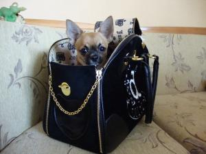 Куче в чанта